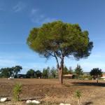 15 MONTINHO DAS OLIVEIRAS _ HOUSES VIEW FROM ENTRANCE