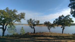 17 MONTINHO DAS OLIVEIRAS _ CORK TREES AND LAKE VIEW