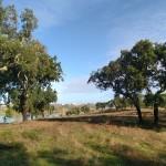 18 MONTINHO DAS OLIVEIRAS _ LAND WITH CORK TREES VIEW LAKE
