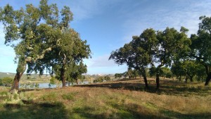 18 MONTINHO DAS OLIVEIRAS _ LAND WITH CORK TREES VIEW LAKE